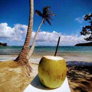 Freshly opened coconut